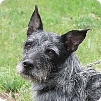 Adopt A Pet :: Pickles - Greeley, CO
