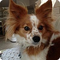 Adopt A Pet :: Lacey (in VA) - Marietta, GA