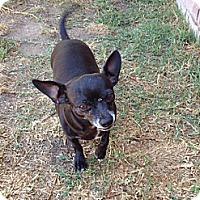 Adopt A Pet :: Lucy - Van Nuys, CA
