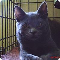 Adopt A Pet :: GERALD - Acme, PA