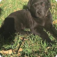 Adopt A Pet :: Bonnie - Saskatoon, SK