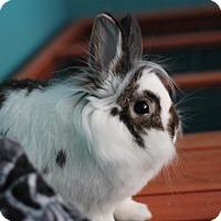 Adopt A Pet :: Theo - Portland, ME