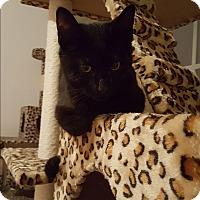 Adopt A Pet :: Tipper - Salisbury, NC