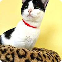 Adopt A Pet :: Lorraine - Oak Park, IL