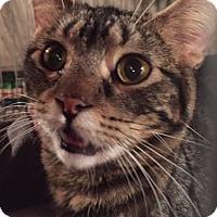 Adopt A Pet :: *Gabby* - Manitowoc, WI