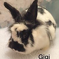 Adopt A Pet :: Gigi - Auburn, CA