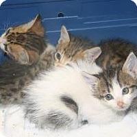 Adopt A Pet :: 298527 - Wildomar, CA