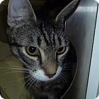 Adopt A Pet :: Hans - Hamburg, NY