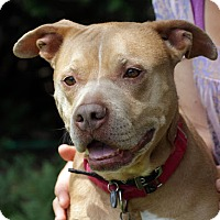 Adopt A Pet :: Mary ~ There's Something About Mary! - Caldwell, NJ
