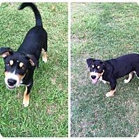 Adopt A Pet :: Jacob - Longview, TX