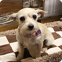 Adopt A Pet :: Cristal - Forreston, TX
