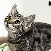 Adopt A Pet :: Sherbert - Hawthorne, CA
