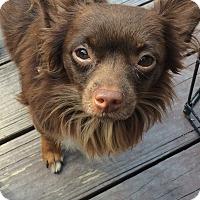 Adopt A Pet :: Davis - Cleveland, OH
