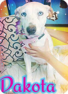 Cattle Dog Mix Dog for adoption in Odessa, Texas - Dakota