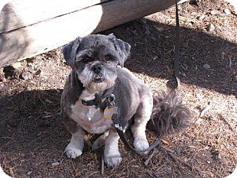 Lhasa Apso Dog for adoption in Logan, Utah - Max