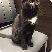 Adopt A Pet :: Sonya - Breinigsville, PA