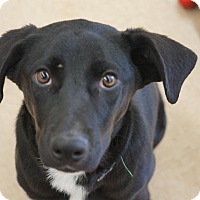 Adopt A Pet :: Mira - Smithtown, NY