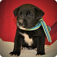 Adopt A Pet :: Petty ~ ADOPTED! - Allentown, PA