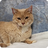 Adopt A Pet :: Kevin Bacon - STRAY - Midland, MI