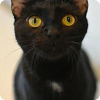 Adopt A Pet :: Quartz - Aiken, SC