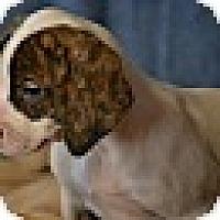 Adopt A Pet :: Cassie - Okeechobee, FL