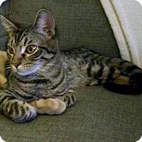 Adopt A Pet :: Charlie (#2) - Garland, TX