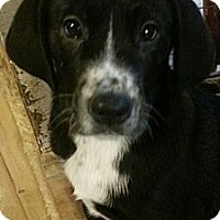 Adopt A Pet :: Jacob(PENDING!) - Chicago, IL
