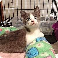 Adopt A Pet :: Zephie - Byron Center, MI