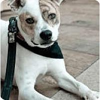 Adopt A Pet :: Tony - Staunton, VA
