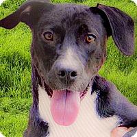 Adopt A Pet :: Maurice needs foster asap - Sacramento, CA