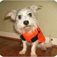 Adopt A Pet :: Sebastian - Mooy, AL