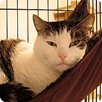 Adopt A Pet :: ORVILLE - Huntington Station, NY