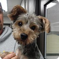 Adopt A Pet :: Mark - baltimore, MD