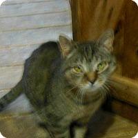 Adopt A Pet :: Millie - N. Berwick, ME