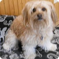 Adopt A Pet :: Rosita - dewey, AZ