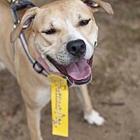 Adopt A Pet :: Tina - Tanner, AL