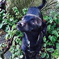 Adopt A Pet :: Sonny - Gig Harbor, WA
