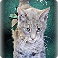 Adopt A Pet :: Azure - Benton, AR