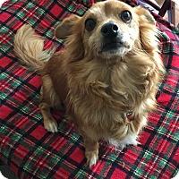 Adopt A Pet :: Lucky - Encino, CA