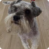 Adopt A Pet :: Casey - Redondo Beach, CA