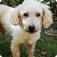 Adopt A Pet :: S/C Jason - Miami, FL