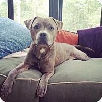 Adopt A Pet :: Koolbe - Jacksonville, NC
