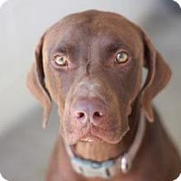 Adopt A Pet :: HENRIK - Kyle, TX
