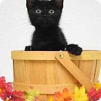Adopt A Pet :: Spruce - Dublin, CA