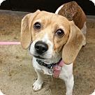 Adopt A Pet :: Franny