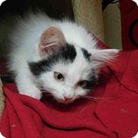 Adopt A Pet :: SHALIMAR - McKinleyville, CA