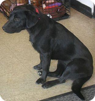 Labrador Retriever Mix Dog for adoption in Grand Saline, Texas - Trixie