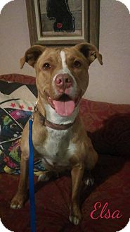 American Pit Bull Terrier Mix Dog for adoption in Des Moines, Iowa - Elsa