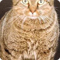 Adopt A Pet :: Zen - Newland, NC
