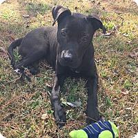 Adopt A Pet :: Sage - Kingston, TN